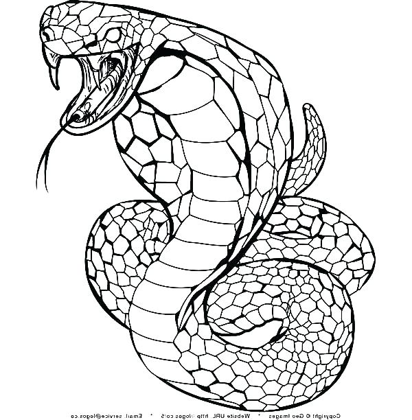 600x612 Rattlesnake Coloring Page Coloring Page Snake Snake Coloring Pages