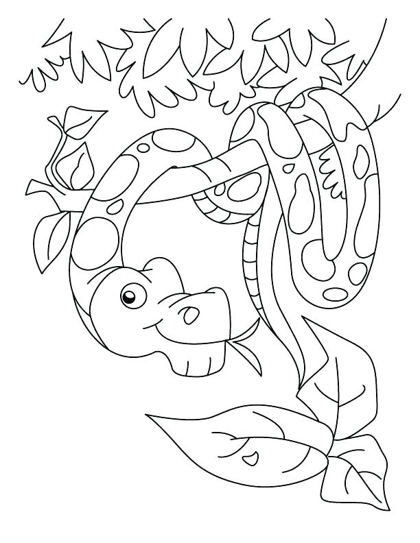 612x792 Snake Color Page Boa Snake Coloring Page Free Snake Color Pages