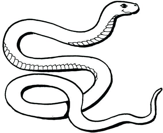 567x463 Snake Coloring Pages For Kids