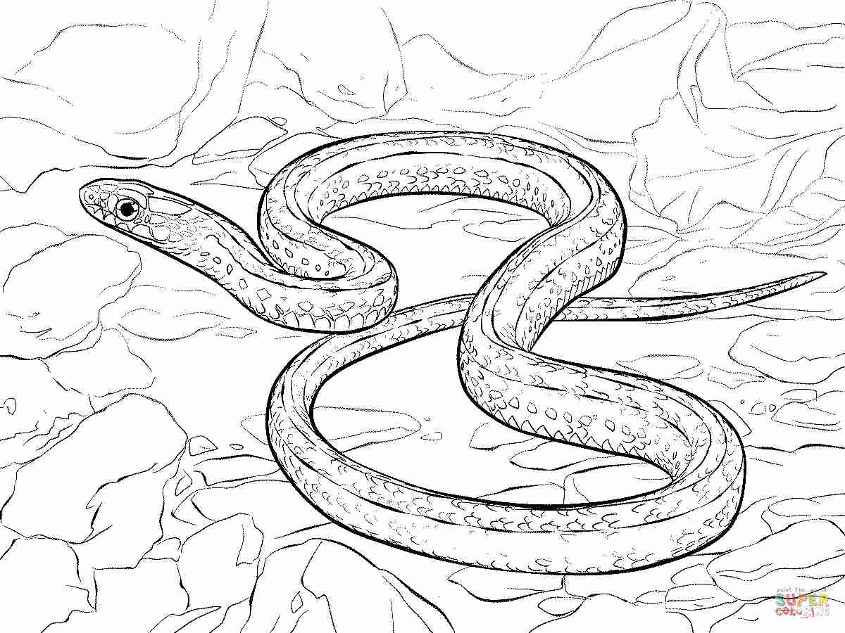 1200x900 Plains Garter Snake Coloring Page Free Printable Pages Bright
