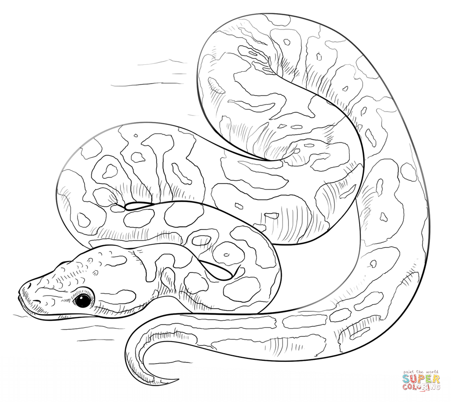 918x818 Snake Coloring Pages Printable Snakes Coloring Pages Free Coloring