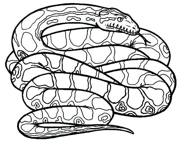 600x488 Coloring Pages Of Snakes Coloring Pages Of Snakes Also Cartoon