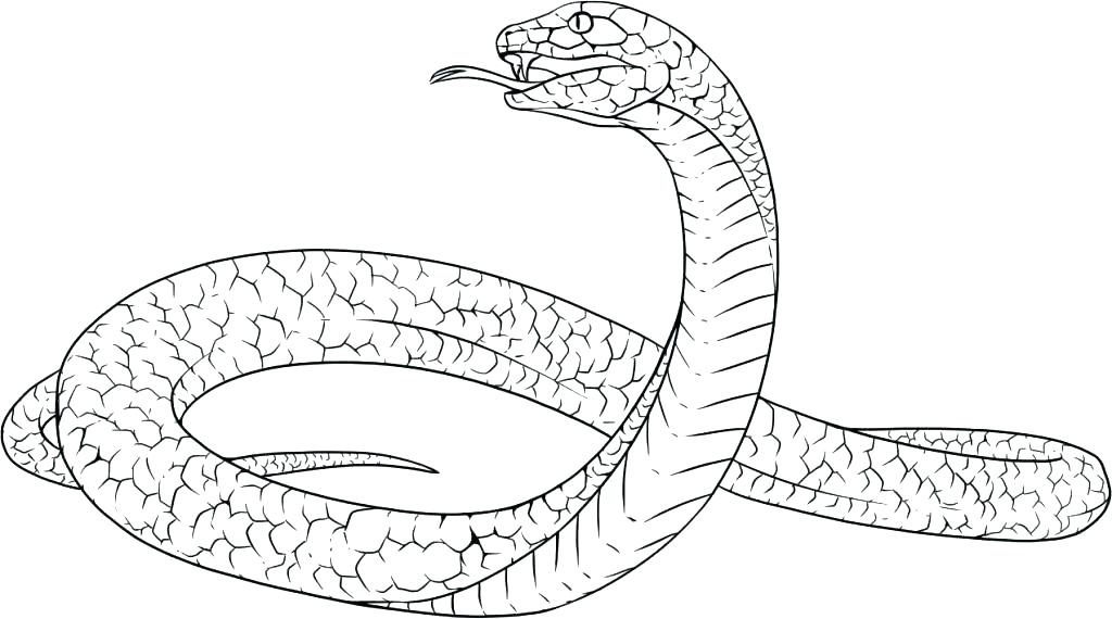 Snake Coloring Pages Realistic At GetDrawings Free Download