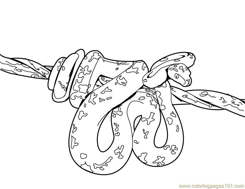 800x618 Free Printable Snake Coloring Pages
