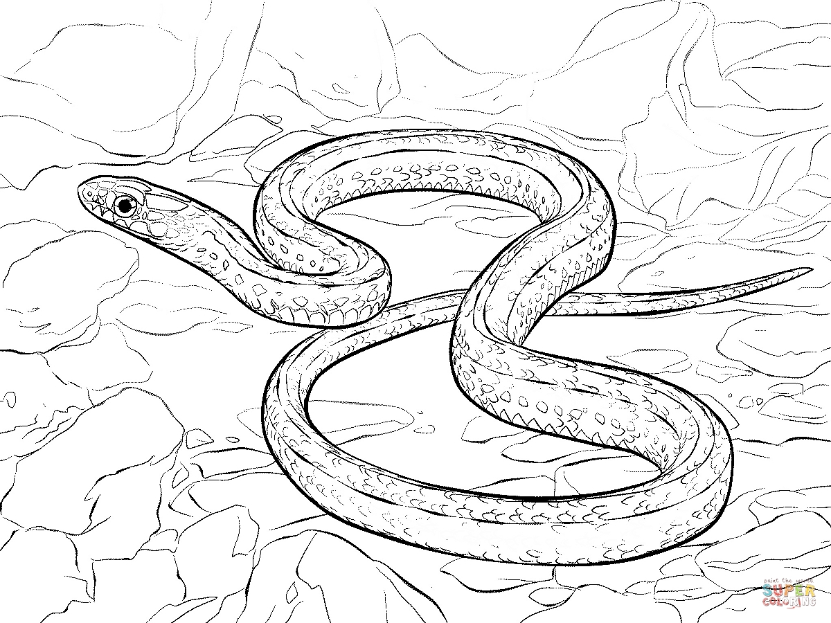 1200x900 Racer Snake Coloring Pages Printable Coloring For Kids