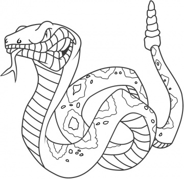 360x350 Rattlesnake Coloring Pages