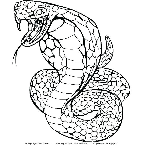 600x612 Coloring Pages Snakes Rattlesnake Coloring Pages Coloring Page