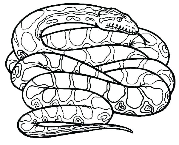 600x488 Snake Coloring Pages Coloring Pages Snakes Coloring Pages