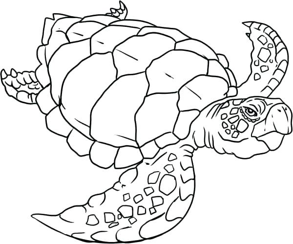 600x499 Coloring Page Of A Turtle Turtle Color Sheet Old Sea Turtle