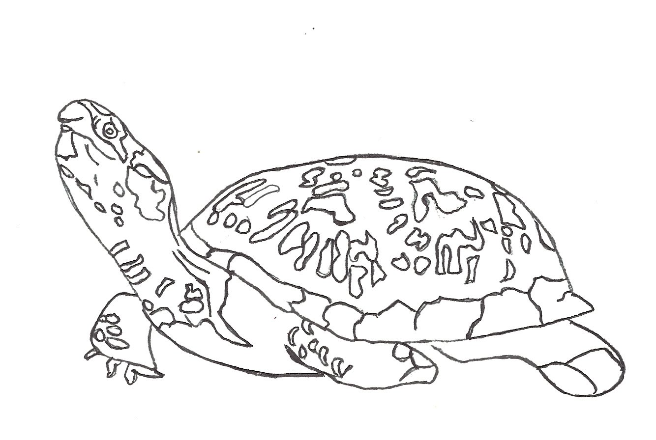 1334x896 Coloring Pages Turtle