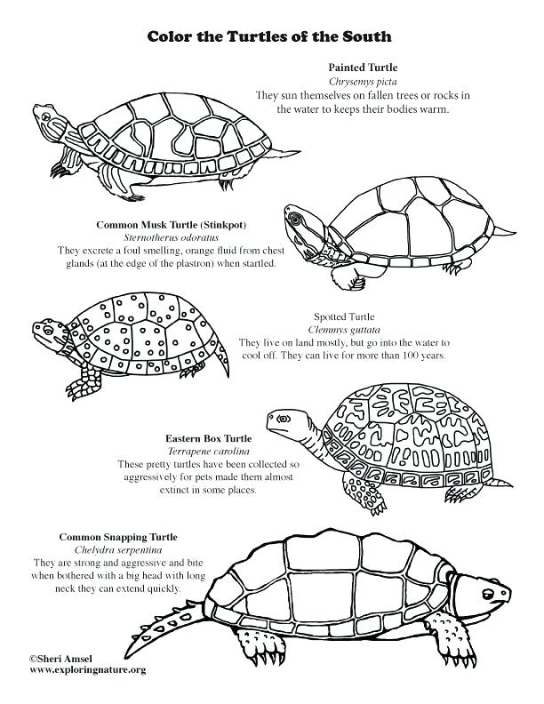 612x792 Painted Turtle Coloring Page Coloring Pages For Kids Cars