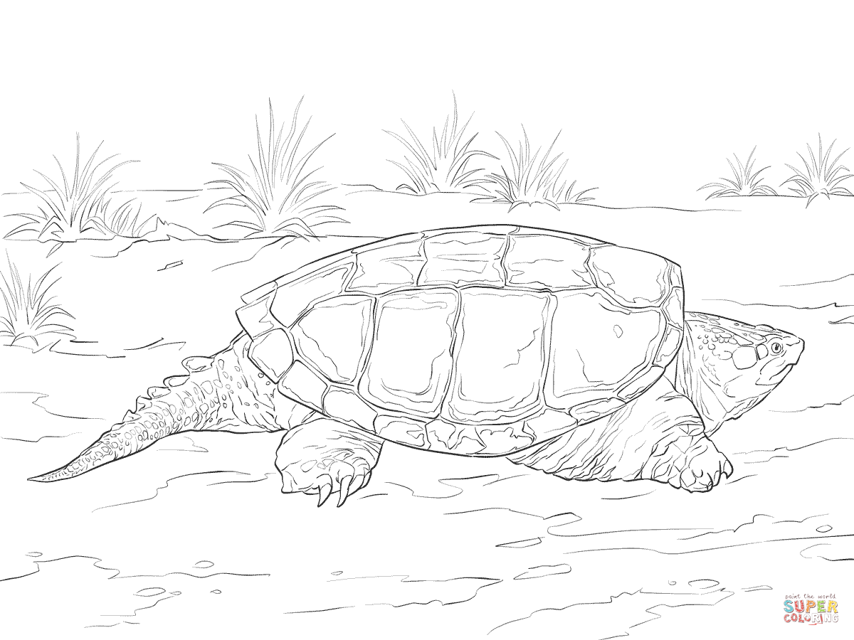 1200x900 Realistic Common Snapping Turtle Coloring Page Free Printable