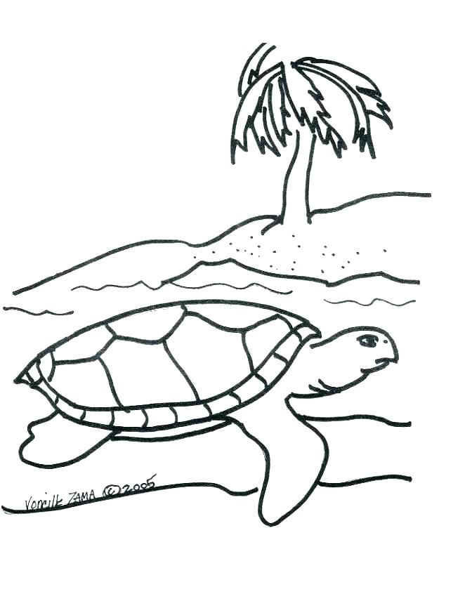 672x856 Sea Turtles Coloring Pages Snapping Turtle Coloring Page Coloring