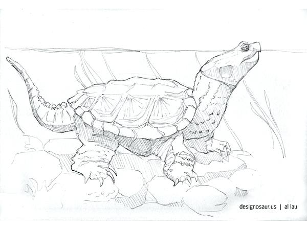 600x450 Snapping Turtle Coloring Page Ninja Turtles Coloring Pages Turtle