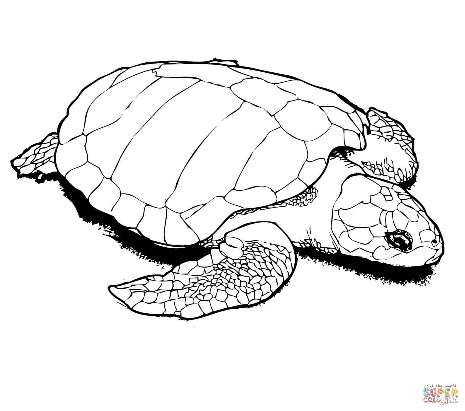 1540x1364 Soar Coloring Page Of A Turtle Turtles Pages F