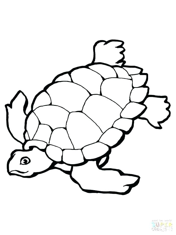 700x933 Turtle Coloring Pictures Green Sea Turtle Coloring Pages