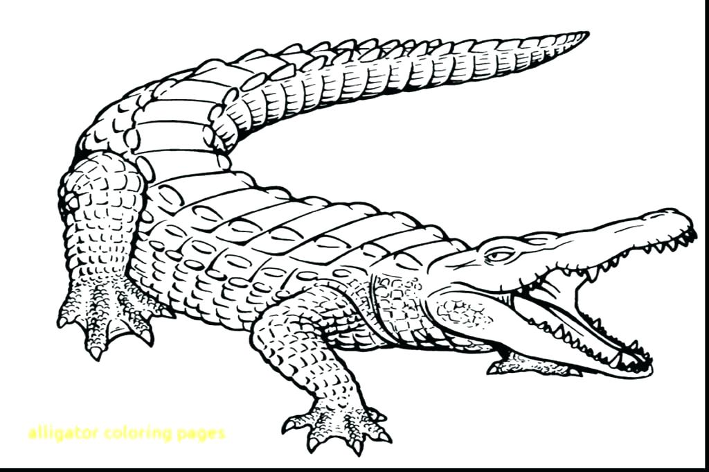 1024x681 Alligator Snapping Turtle Coloring Pictures Dragon Outline