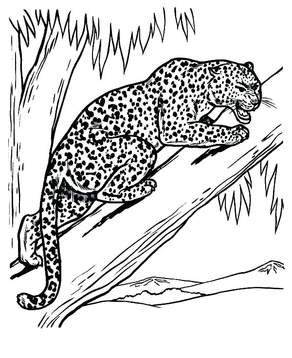600x734 Feeling Coloring Pages Snow Leopard Coloring Pages Leopard Feeling