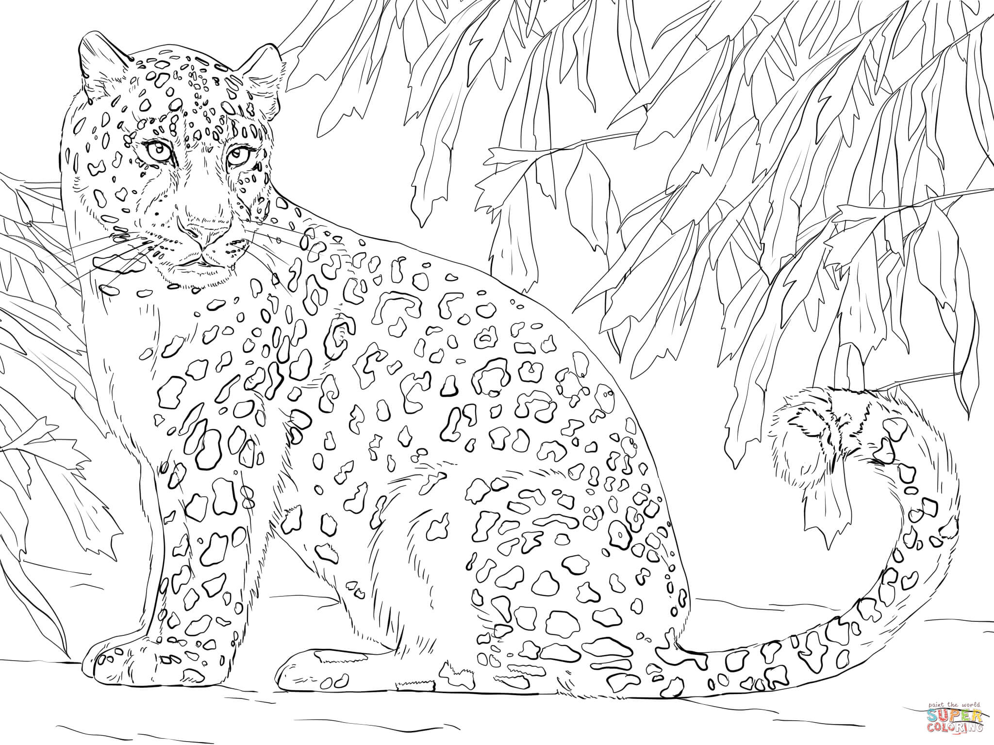 2048x1536 Leopard Coloring Pages