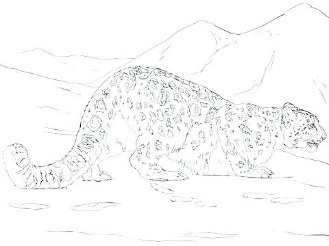 480x360 Leopard Pictures To Draw The Best Leopard Of Drawn Snow Leopard