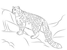 236x176 Snow Leopard Coloring Pages For Kids And Adults Snow Leopard
