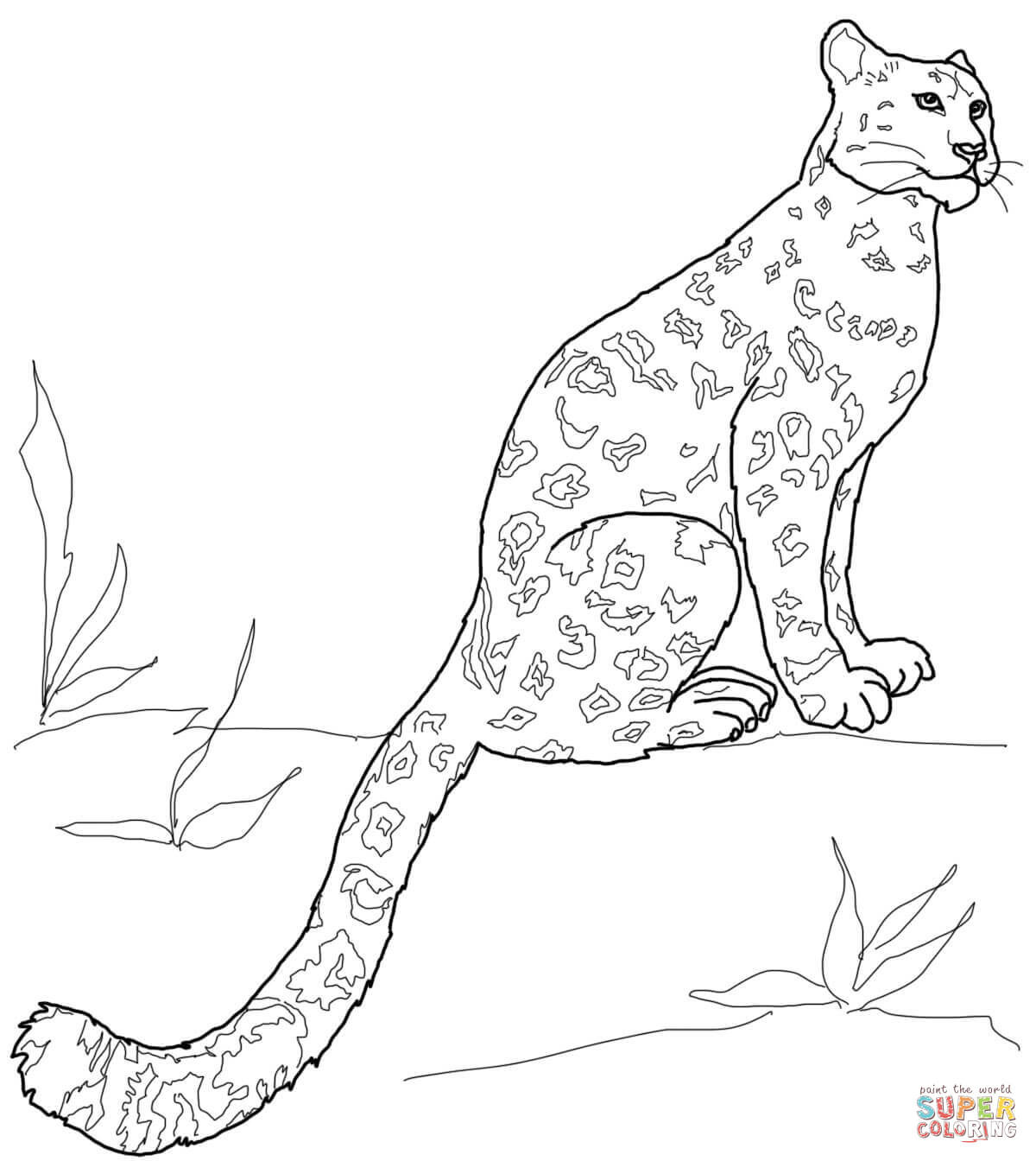 1200x1344 Snow Leopard Clipart Coloring Page Pencil And In Color Ripping
