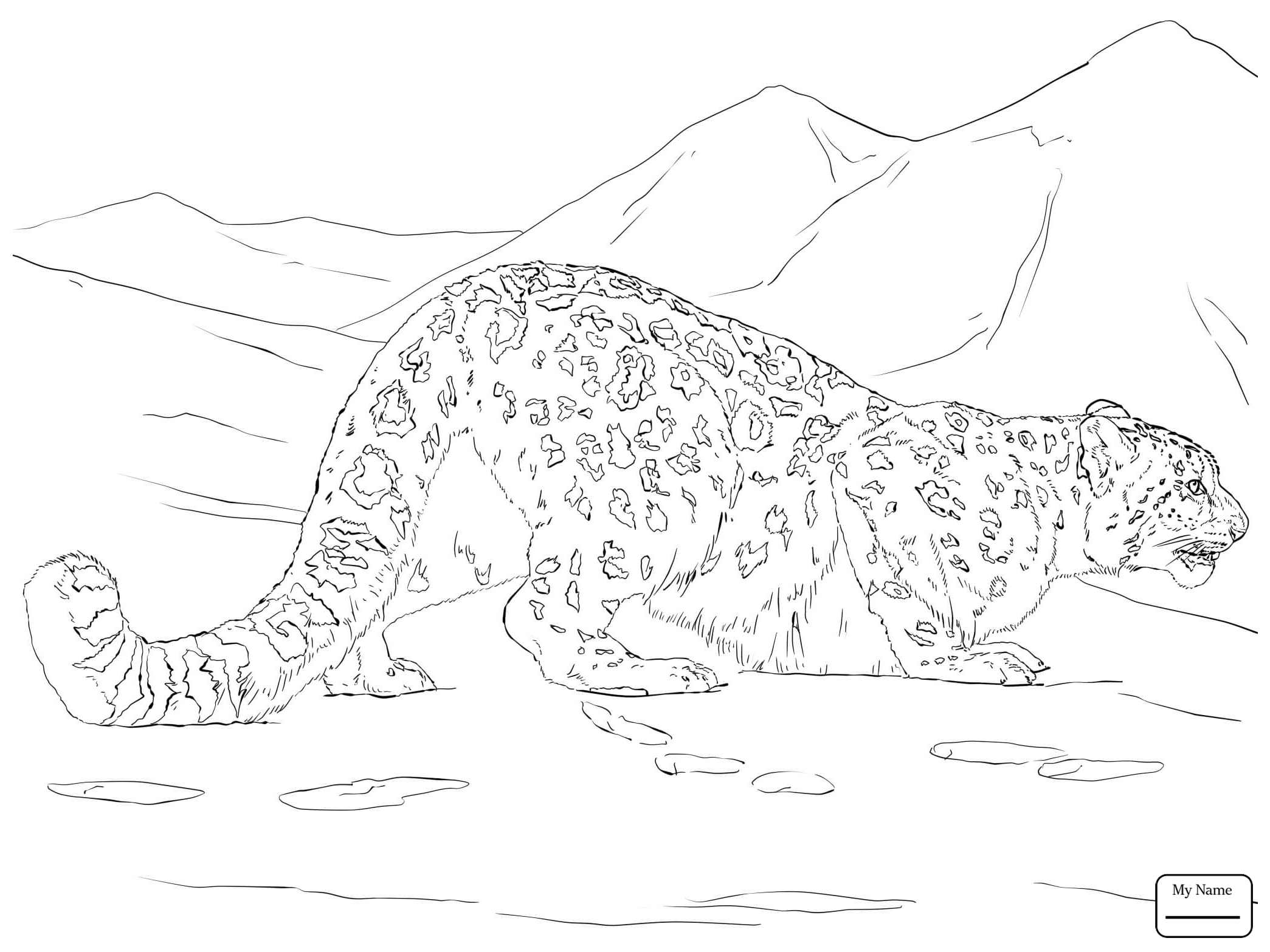 2089x1567 Snow Leopard Coloring Pages