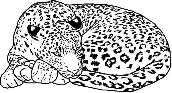 600x326 Snow Leopard Coloring Pages Education Snow Leopard Colouring Sheet
