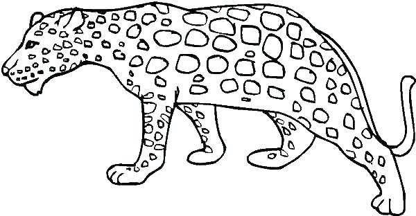 600x312 Snow Leopard Coloring Pages Snow Leopard Coloring Pages Leopard