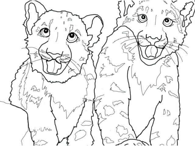 640x480 Snow Leopard Coloring Pages Snow Leopard Coloring Pages Lurker