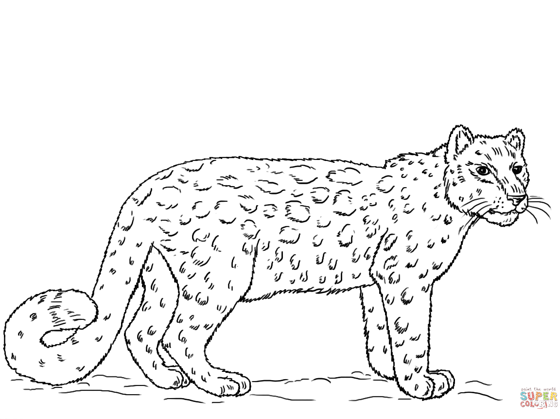 1152x862 Snow Leopards Coloring Pages Free To Download Printable Leopard