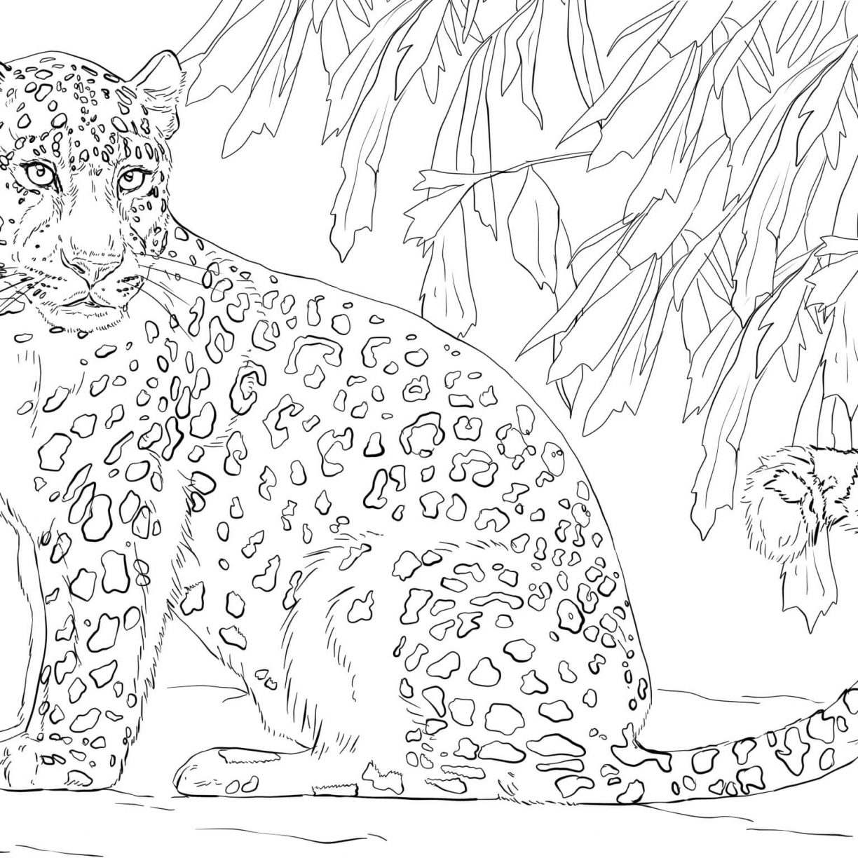 1224x1224 Snow Leopards Coloring Pages Free Hotel To Transylvania Coloring