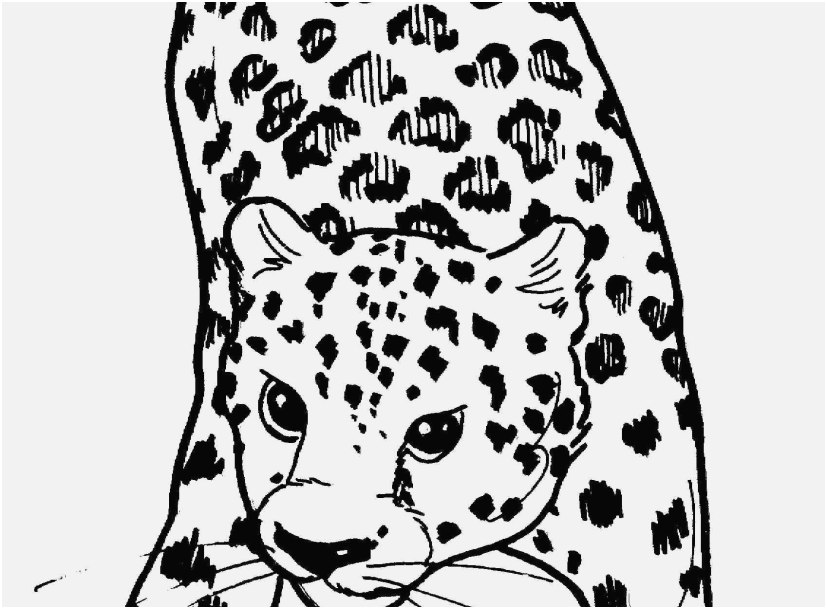 827x609 Coloring Snow Leopard Gallery Free Leopard Coloring Pages