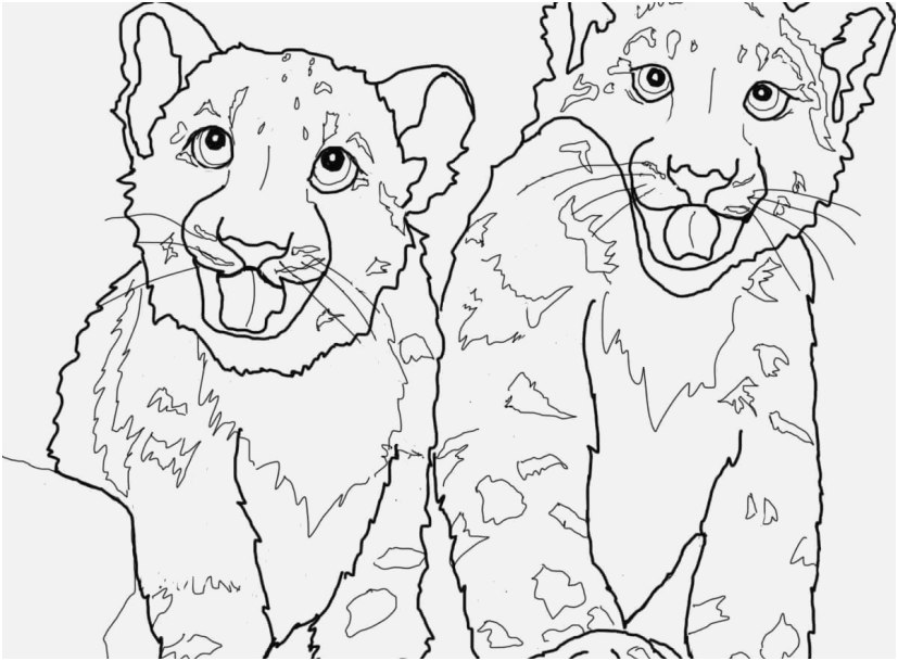 827x609 Coloring Snow Leopard Graphic Babies Snow Leopard Coloring Page
