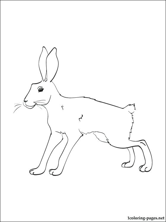 560x750 Coloring Pages Valentines Day Hare Snowshoe Page