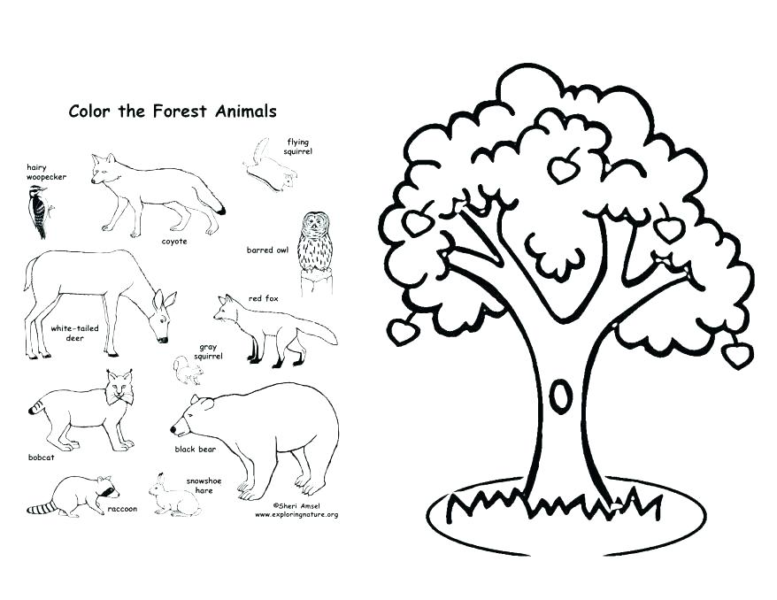 878x678 Forest Coloring Page Coloring Page Forest Coloring Pages Apple