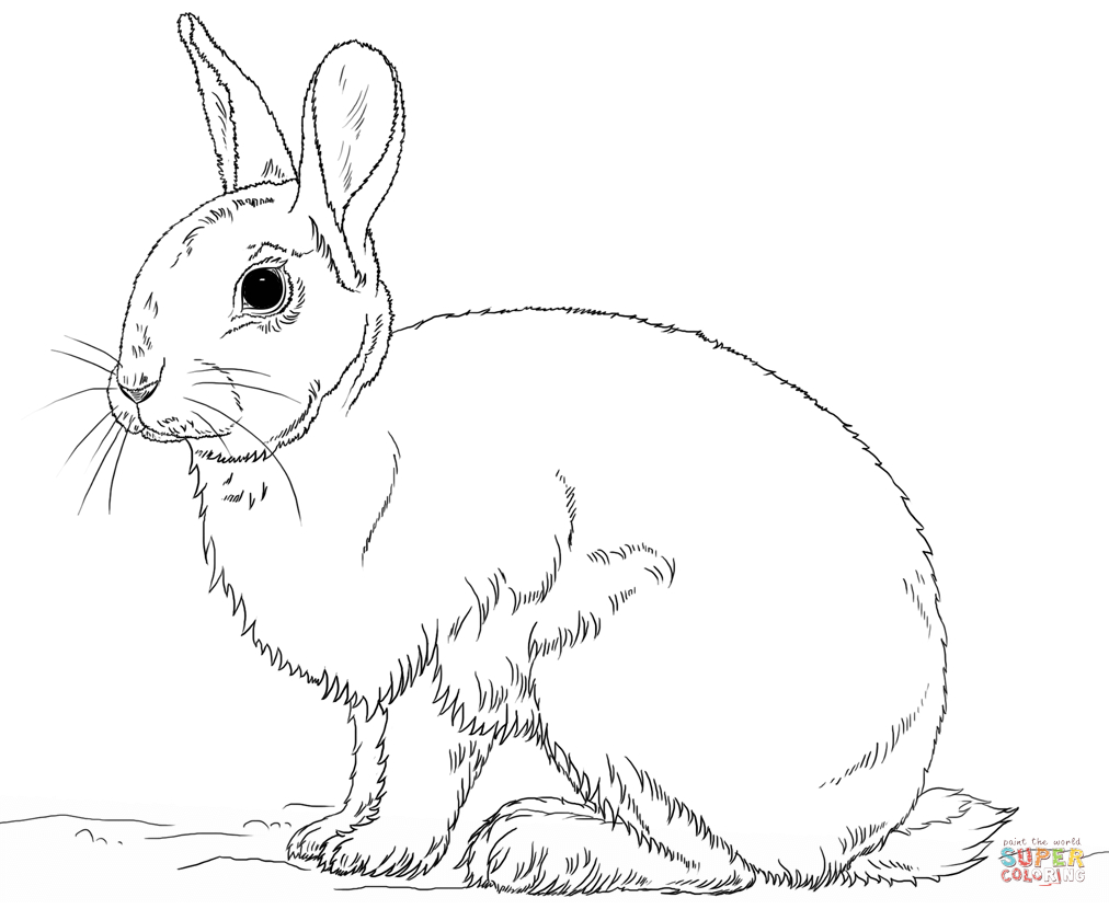 1012x830 Rabbit Coloring Page Printable Coloring Pages