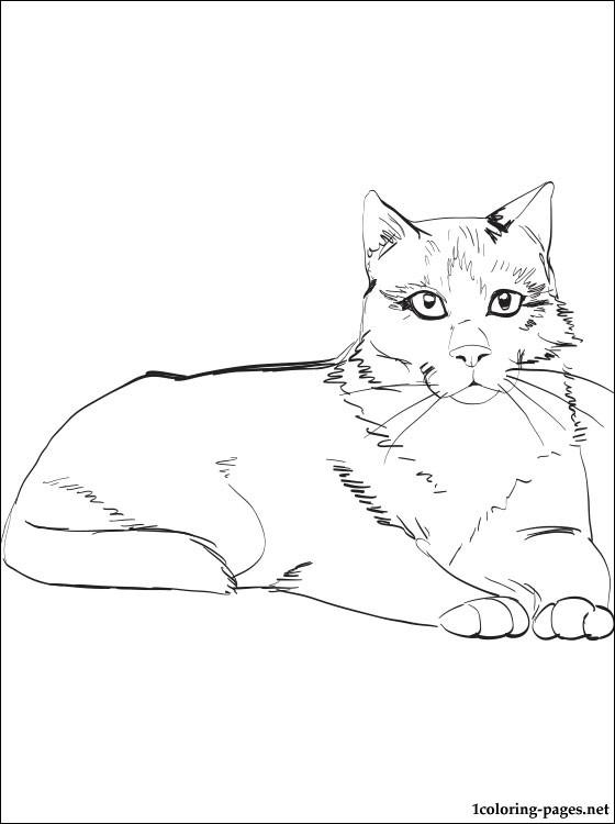 560x750 Snowshoe Cat Coloring Page Coloring Pages