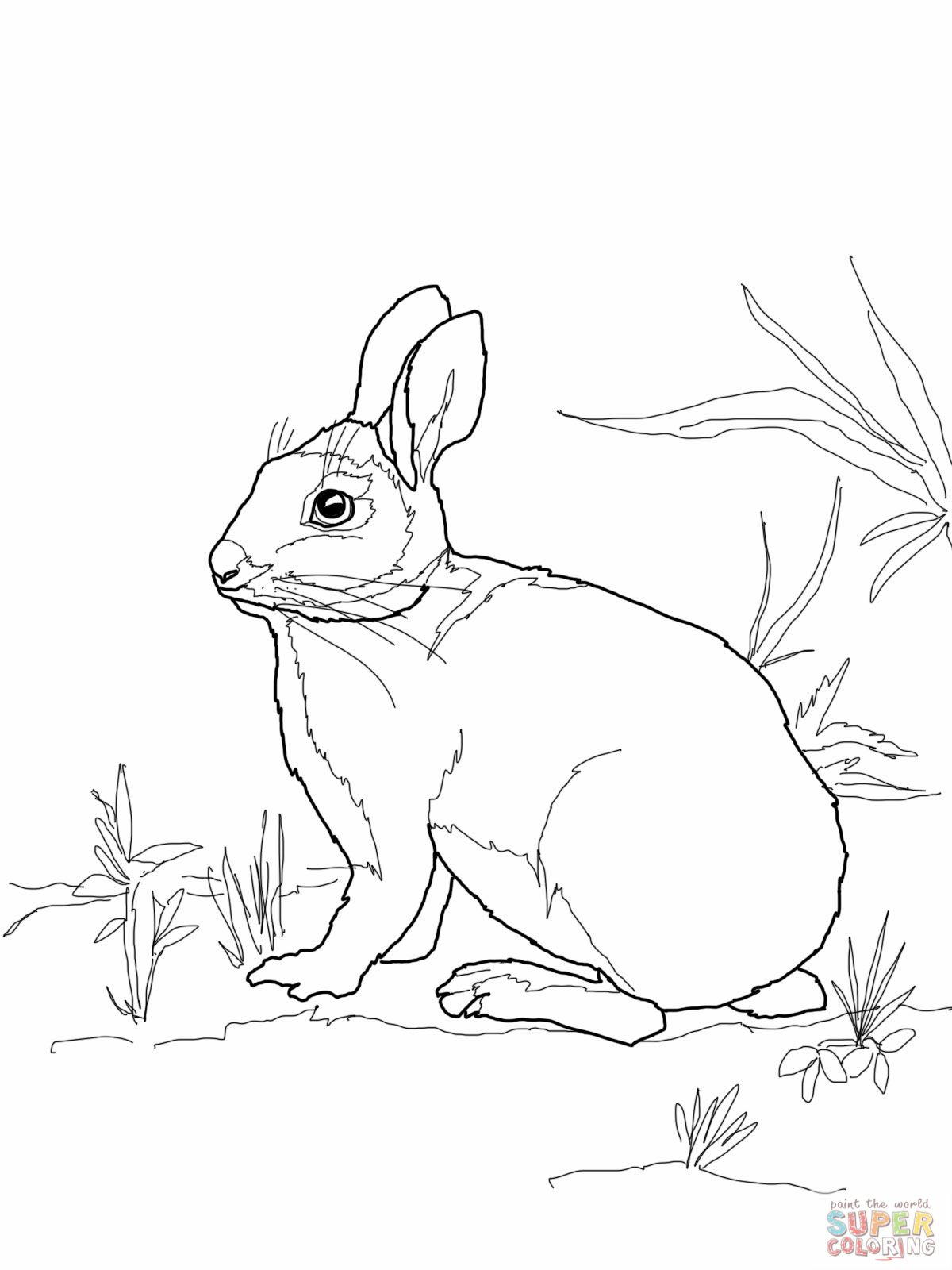 1200x1600 Cottontail Marsh Rabbit Coloring Page Mosaic