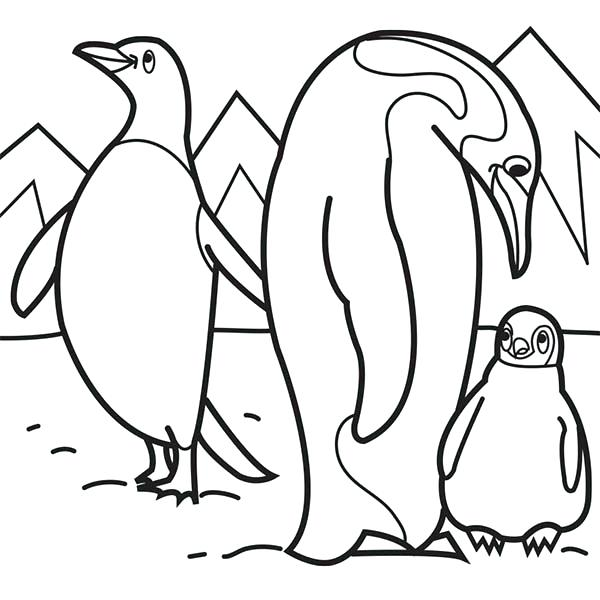 600x600 Snowshoe Animal Coloring Pages Transasia