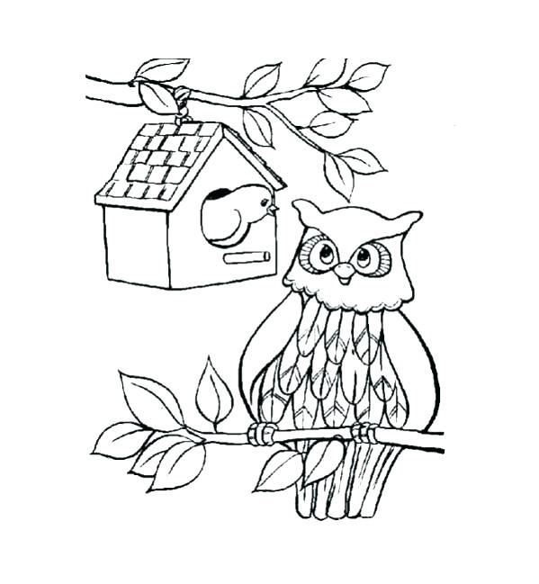 599x649 Coloring Page Owl