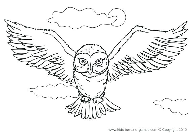 736x522 Cute Owl Coloring Pages Snowy Owl Coloring Pages Detailed Owl