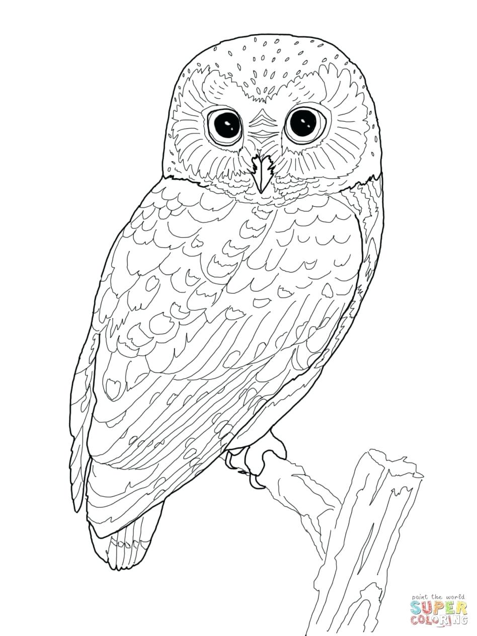 948x1264 Edge Snowy Owl Coloring Page High Tech Pictures To Print Pages