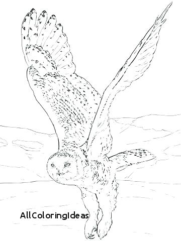 360x480 Free Printable Owl Coloring Pictures Owl Mandala Coloring Page Owl