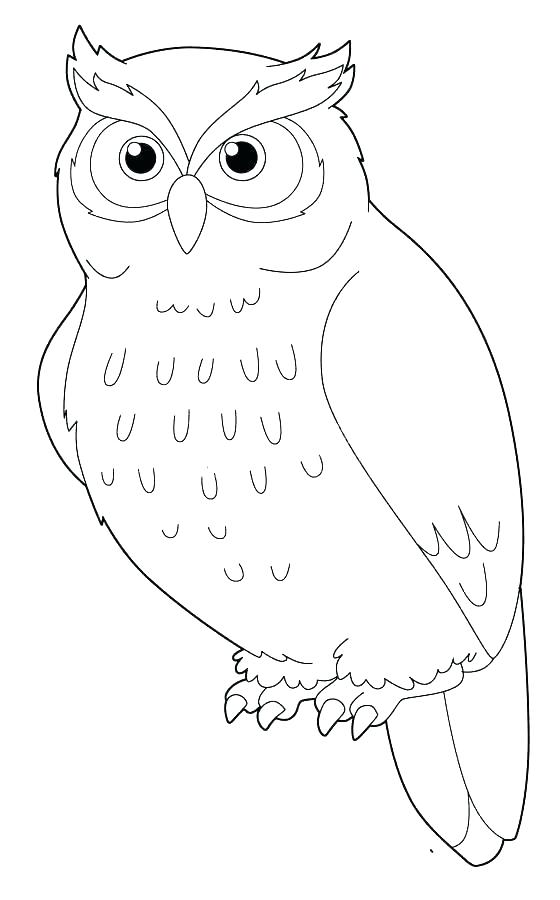 560x900 Owl Color Pages Snowy Owl Coloring Page Snowy Owl Coloring Pages