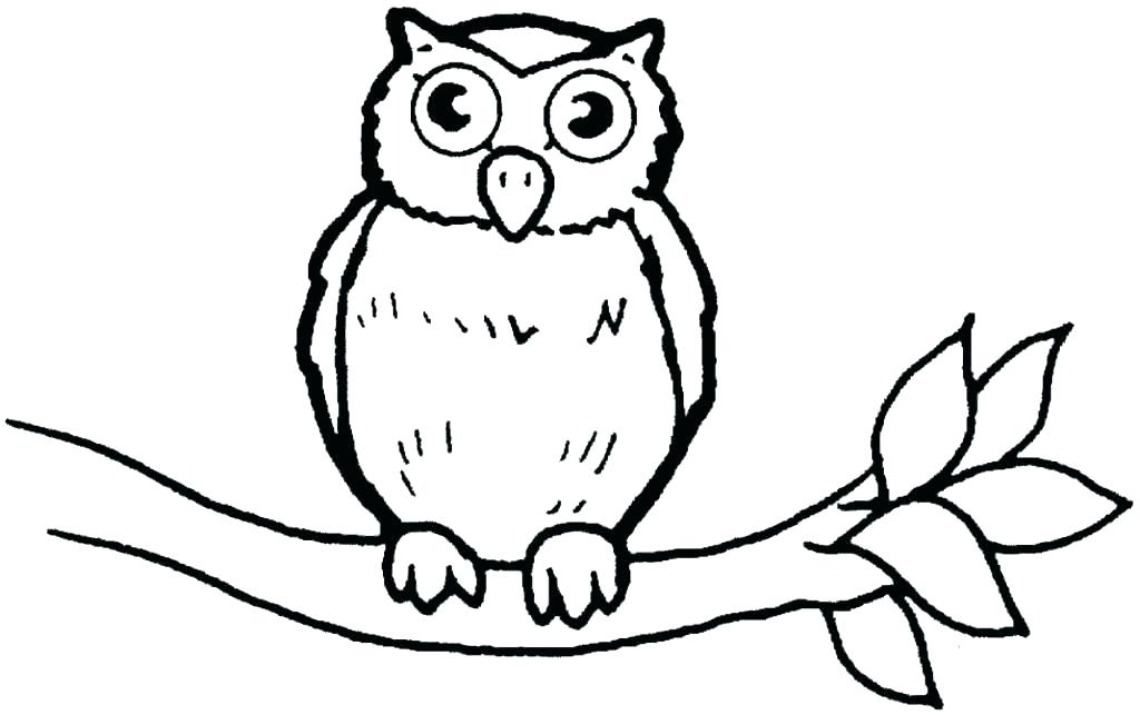 1024x643 Owl Coloring Images Owl Color Page Snowy Owl Coloring Pages Owl