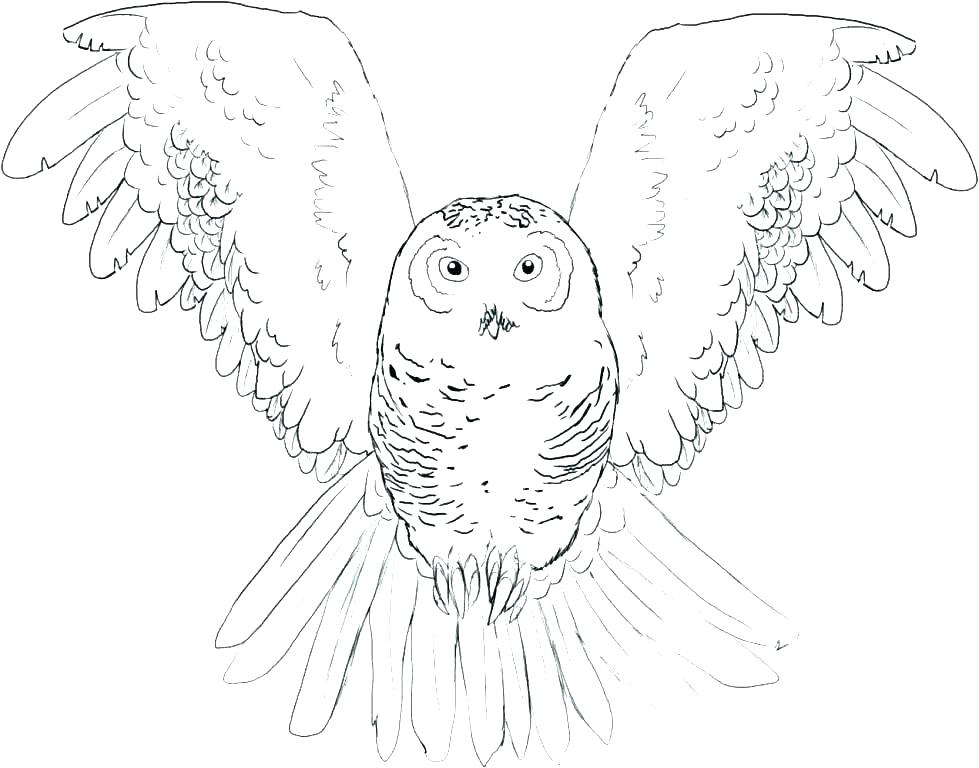 979x768 Snowy Coloring Pages Snowy Owl Colouring Page Owl Color Pages Owl