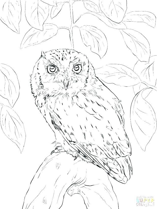 618x824 Snowy Owl Coloring Page Snowy Owl Coloring Page Free Download