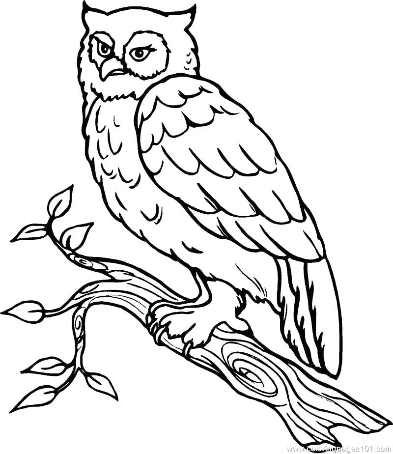 800x924 Snowy Owl Coloring Pages Owl A Coloring Snowy Snowy Owl Colouring