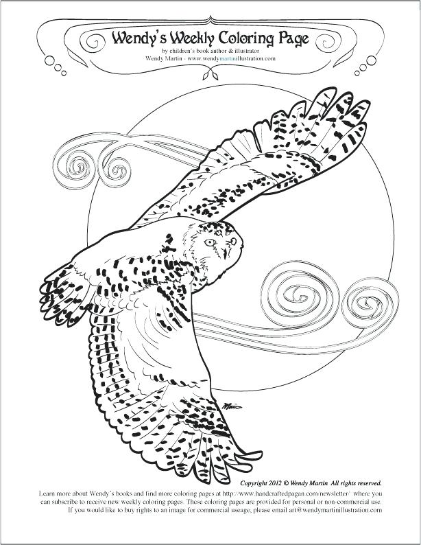 614x794 Snowy Owl Coloring Pages Snowy Owl Coloring Page Snowy Owl Color